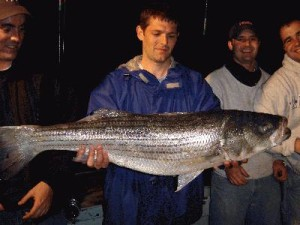 David Jones - 29LB STRIPED BASS, NIGHT TRIP